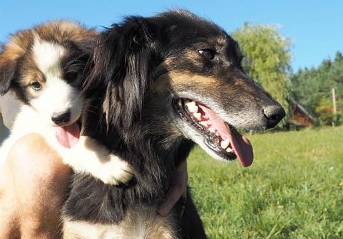 chien de traineau team AVA Vercors