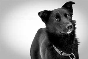 Zaz-chiens-team-AVA-Vercors